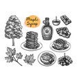 ink sketches desserts with maple syrup vector image vector image