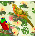 seamless texture tropical bird and sun conure vector image vector image