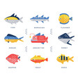 collection of sea and river fish and lettering vector image