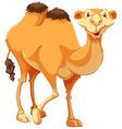 Camel vector image vector image