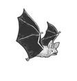 flying bat sketch vector image vector image