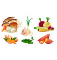 set organic farm vegetables vitamin vector image