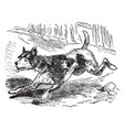 a dog is running vintage line drawing or engraving vector image vector image