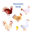 set of domestic birds white vector image