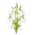 Bouquet of flowers snowdrops on white background vector image vector image