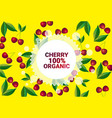 cherry fruit colorful circle copy space organic vector image