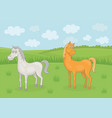 grazing horses vector image