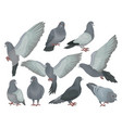 grey pigeons set doves in different poses vector image