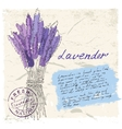 lavender vector image vector image
