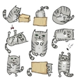 Set with cute cats in various poses vector image vector image