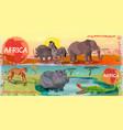 cartoon wild africa horizontal banners vector image vector image