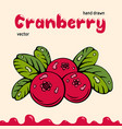 cranberry berries images vector image vector image