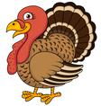 Funny Turkey cartoon vector image vector image