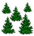 the set of stages of growing spruce or christmas vector image vector image