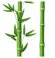 bamboo tree leaf plant stem and stick realistic vector image