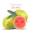 guava fruit realistic isolated on white vector image vector image