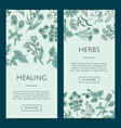 hand drawn medical herbs web banner vector image vector image