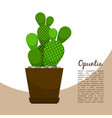 opuntia indoor plant in pot banner vector image vector image