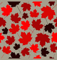 seamless pattern from maple leaves red maple vector image