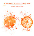 set of watercolor oranges vector image