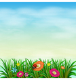 A garden with colourful flowers vector image