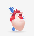 anatomical heart icon human body internal organ vector image