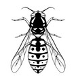 contour black sketch a wasp with a top view on vector image vector image