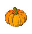 pumpkin autumn harvesting season isolated vector image