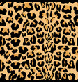 seamless pattern with leopard fur texture vector image vector image