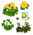 Seeds in bag and growth stages of yellow flowers vector image