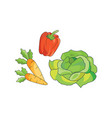 color vegetables icon vector image vector image