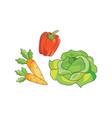 color vegetables icon vector image