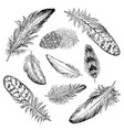 feathers sketch set hand drawn vector image