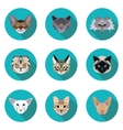 flat icons set of pedigreed cats vector image vector image
