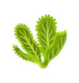 green fresh salad vegetable and herb organic vector image