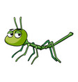 stickinsect with sad eyes vector image vector image