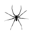 big spider vector image vector image