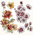 hand drawn flowers in engraved watercolor style vector image
