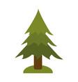 pine tree icon image vector image vector image