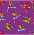 seamless pattern of colorful strelitzia collection vector image vector image