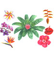 set tropical exotic flowers vector image vector image