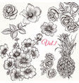 collection of hand drawn floral elements vector image vector image