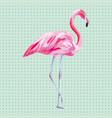 isolated pink flamingo aqua mint background vector image