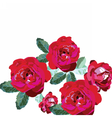 Red Roses bouquet isolated on white vector image vector image