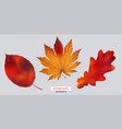 set of autumn leaf isolated vector image