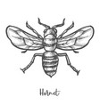 hornet sketch vintage wasp vector image