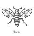 hornet sketch vintage wasp vector image vector image
