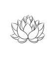 lotus lily water vector image vector image
