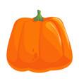 pumpkin seasonal vegetable isolated on white vector image
