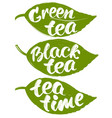 collection with label tea leaves isolated on white vector image vector image